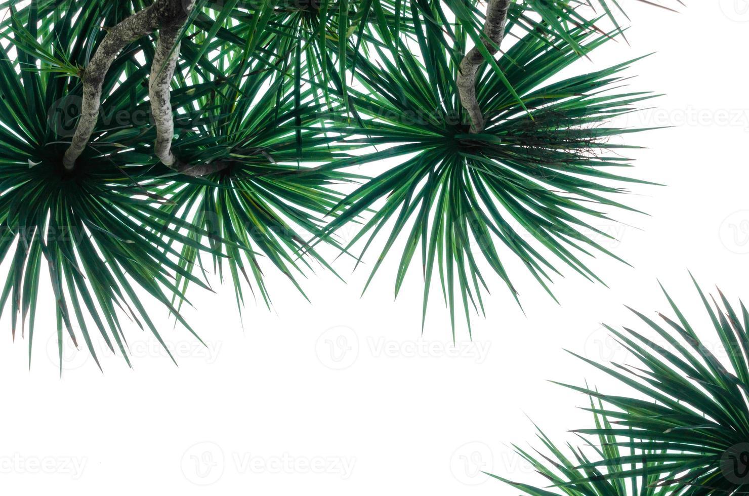 geïsoleerde tropische planten foto