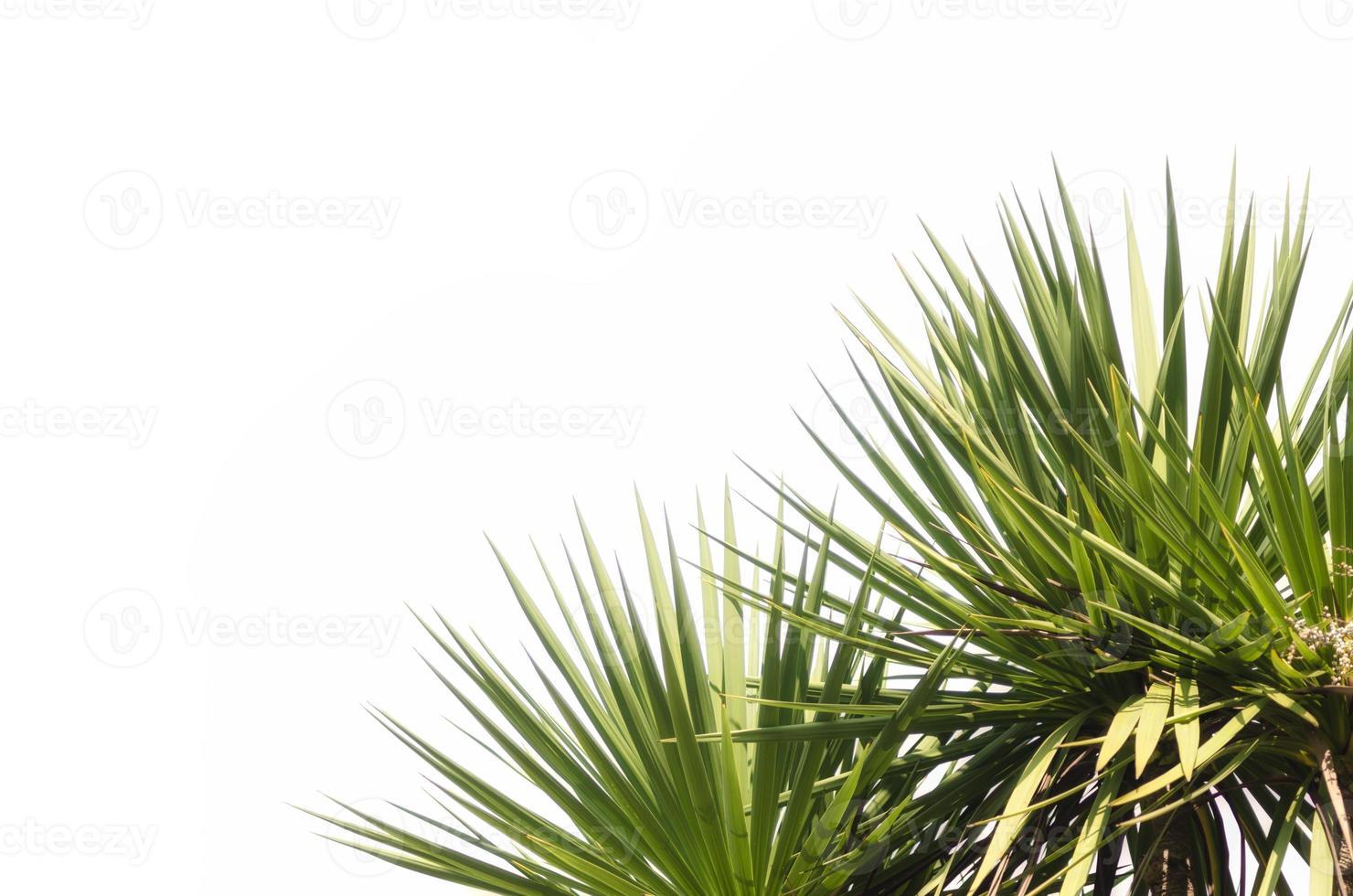 groene tropische planten op een witte achtergrond foto