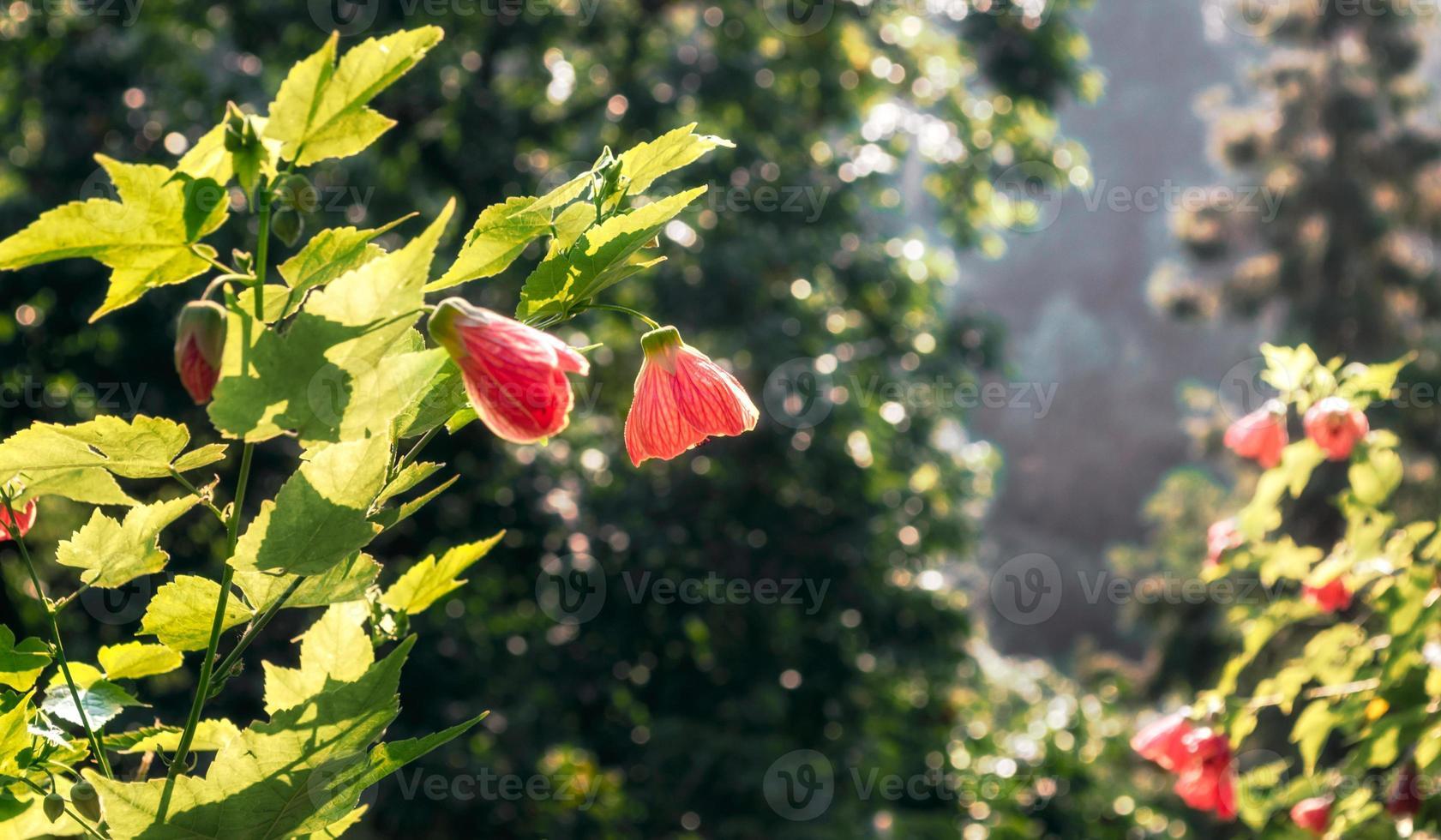 rode bloeiende bloemen foto