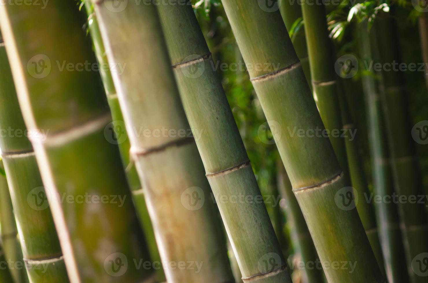 groene bamboe bos close-up foto