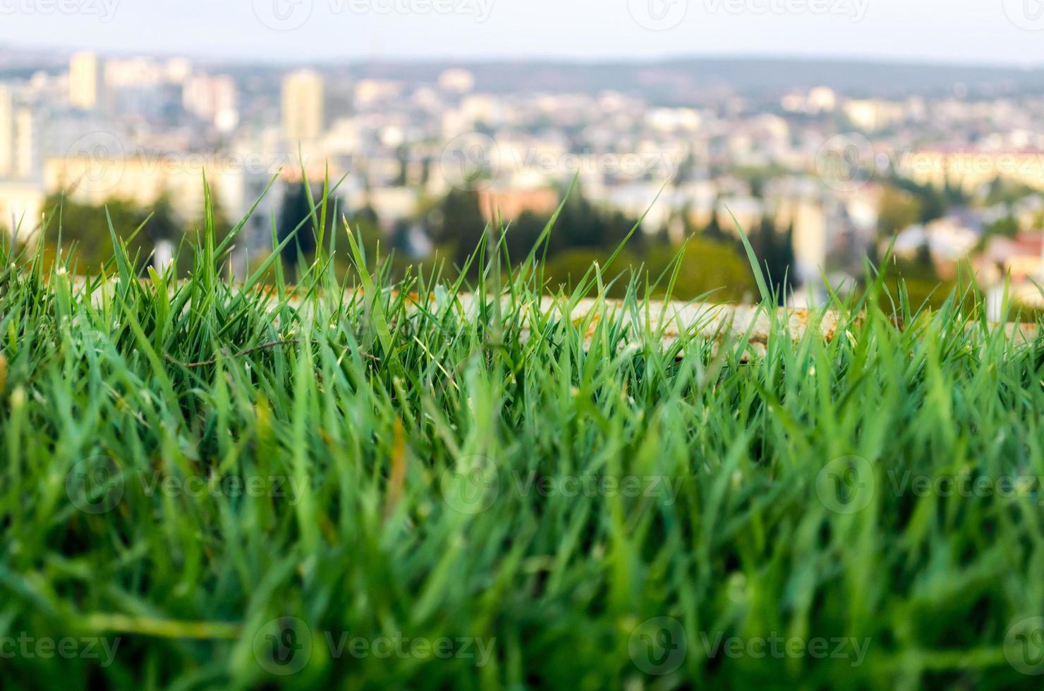 close-up van gras en een stad op de achtergrond foto
