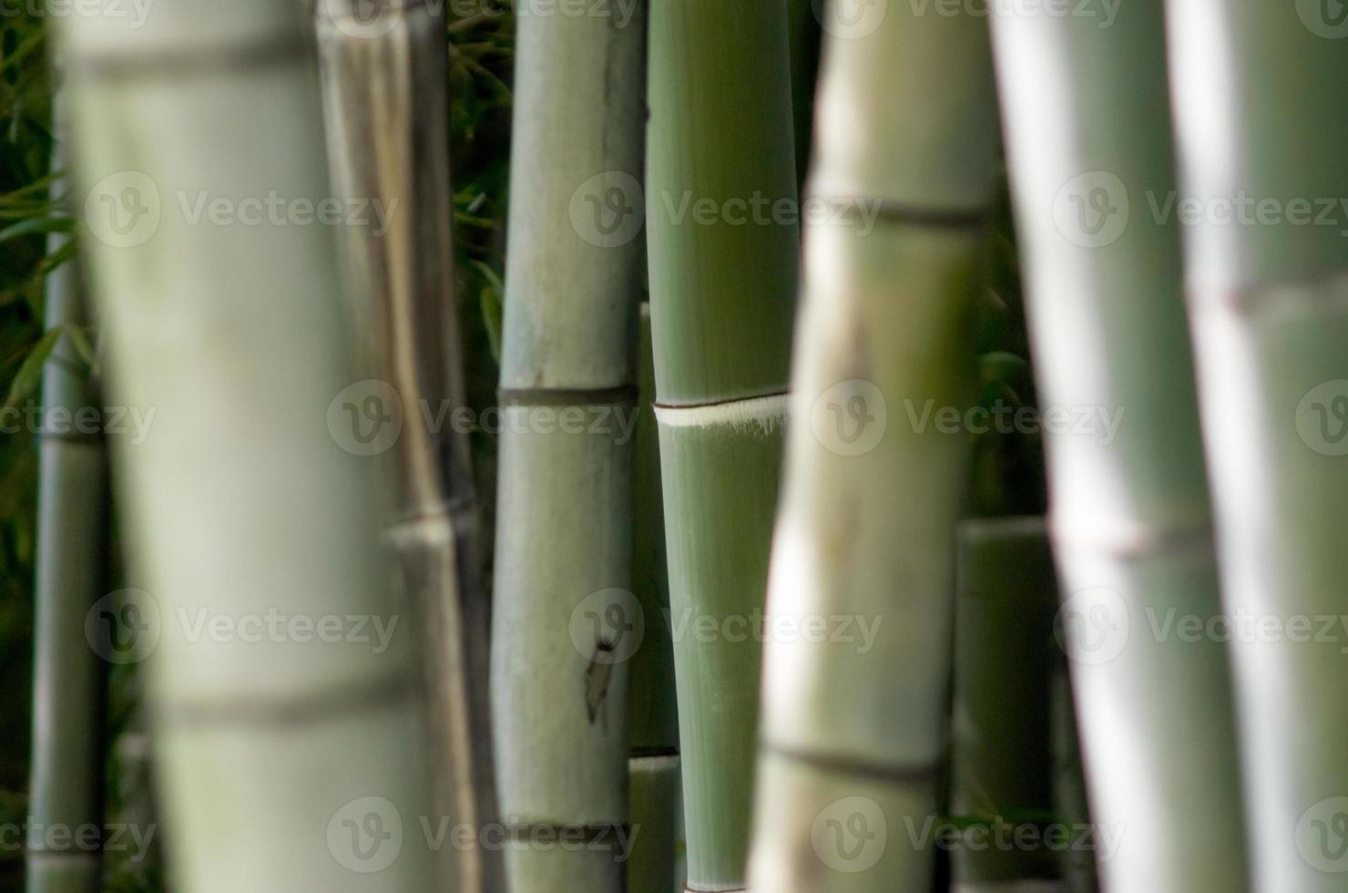 bamboe plant close-up foto