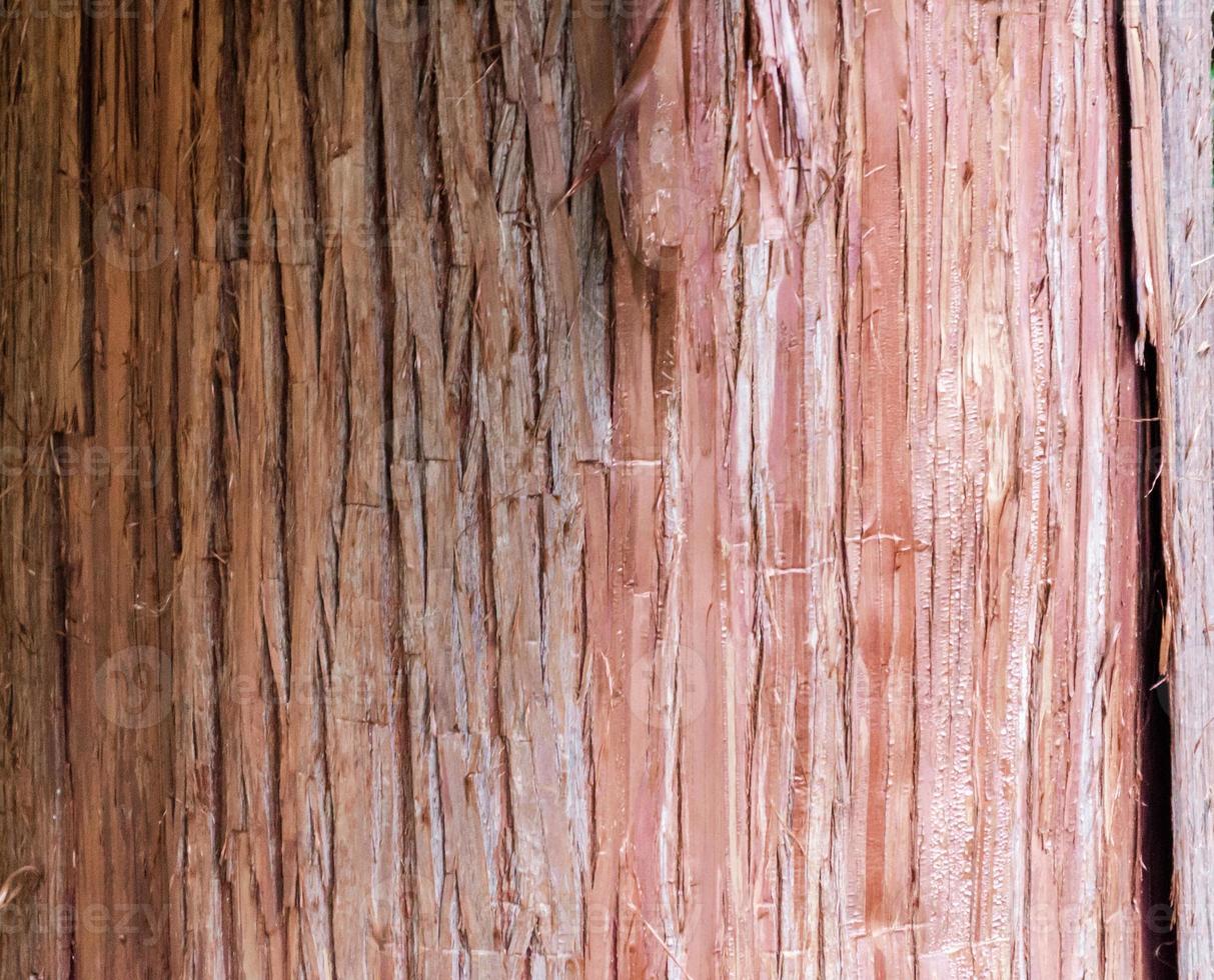 close-up van boomschors foto