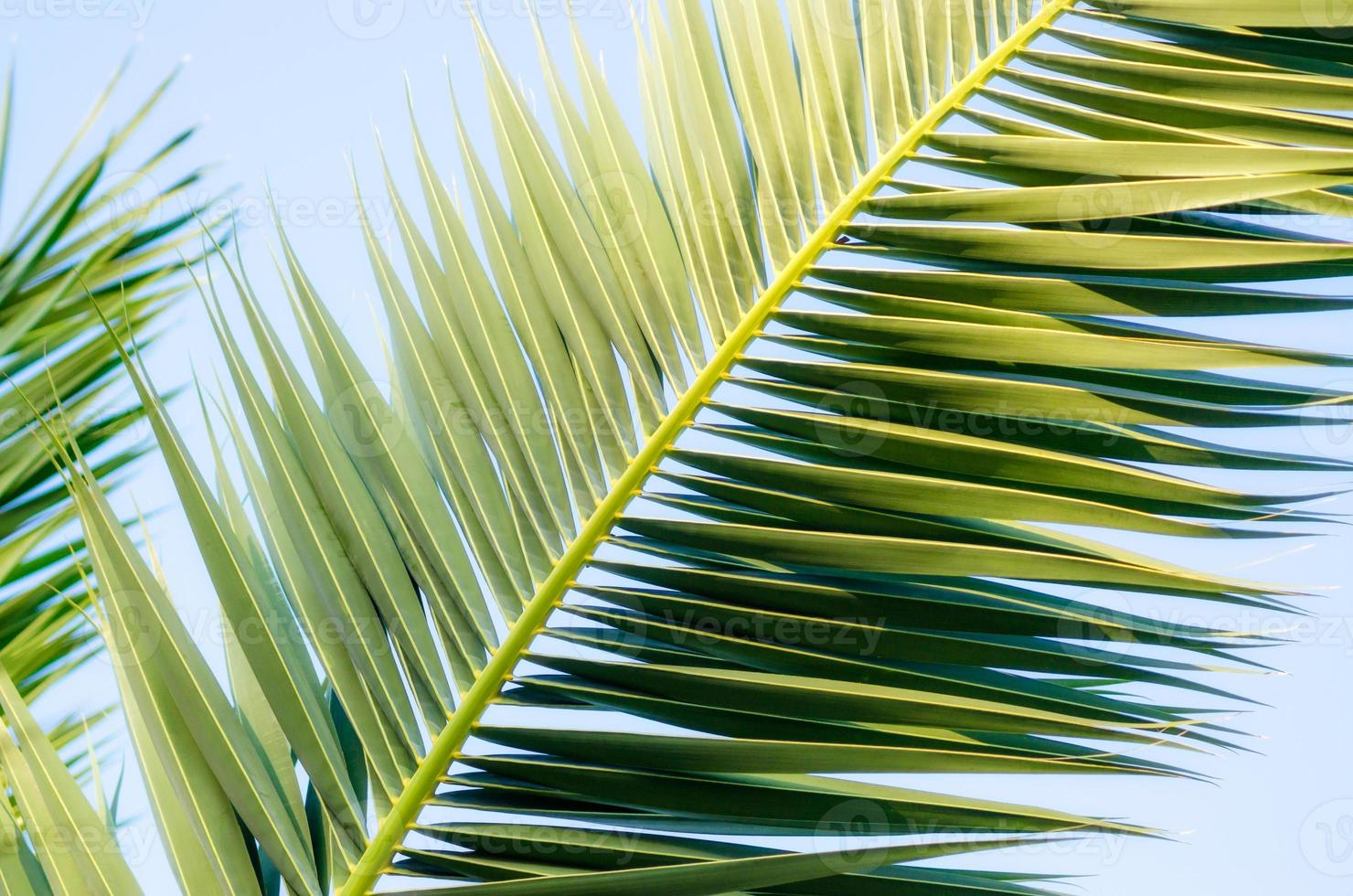 palmbladeren in de lucht foto
