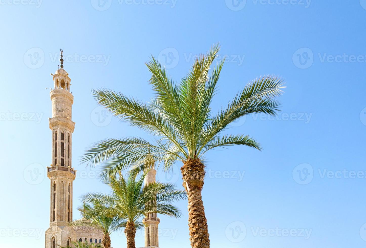 moskee en groene palmbomen foto