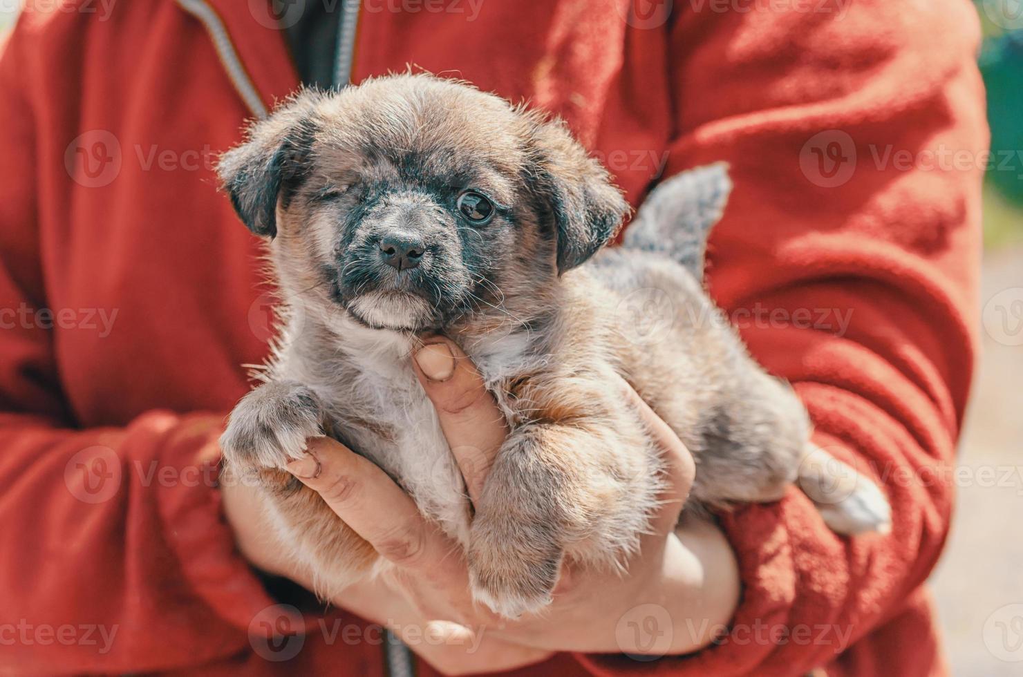 kleine schuilplaats pup foto