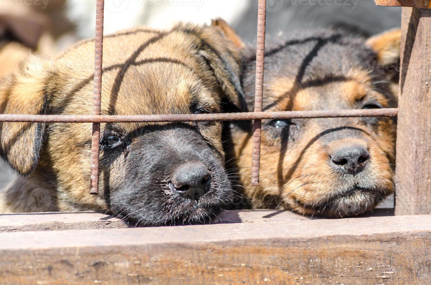 twee pups achter een hek foto