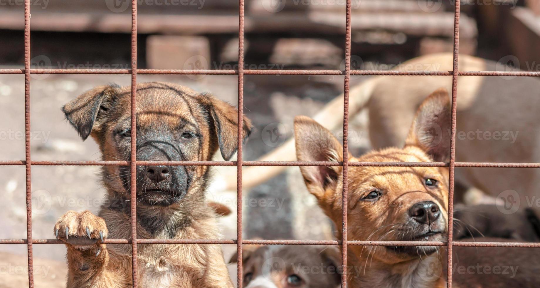 puppy's achter een hek foto