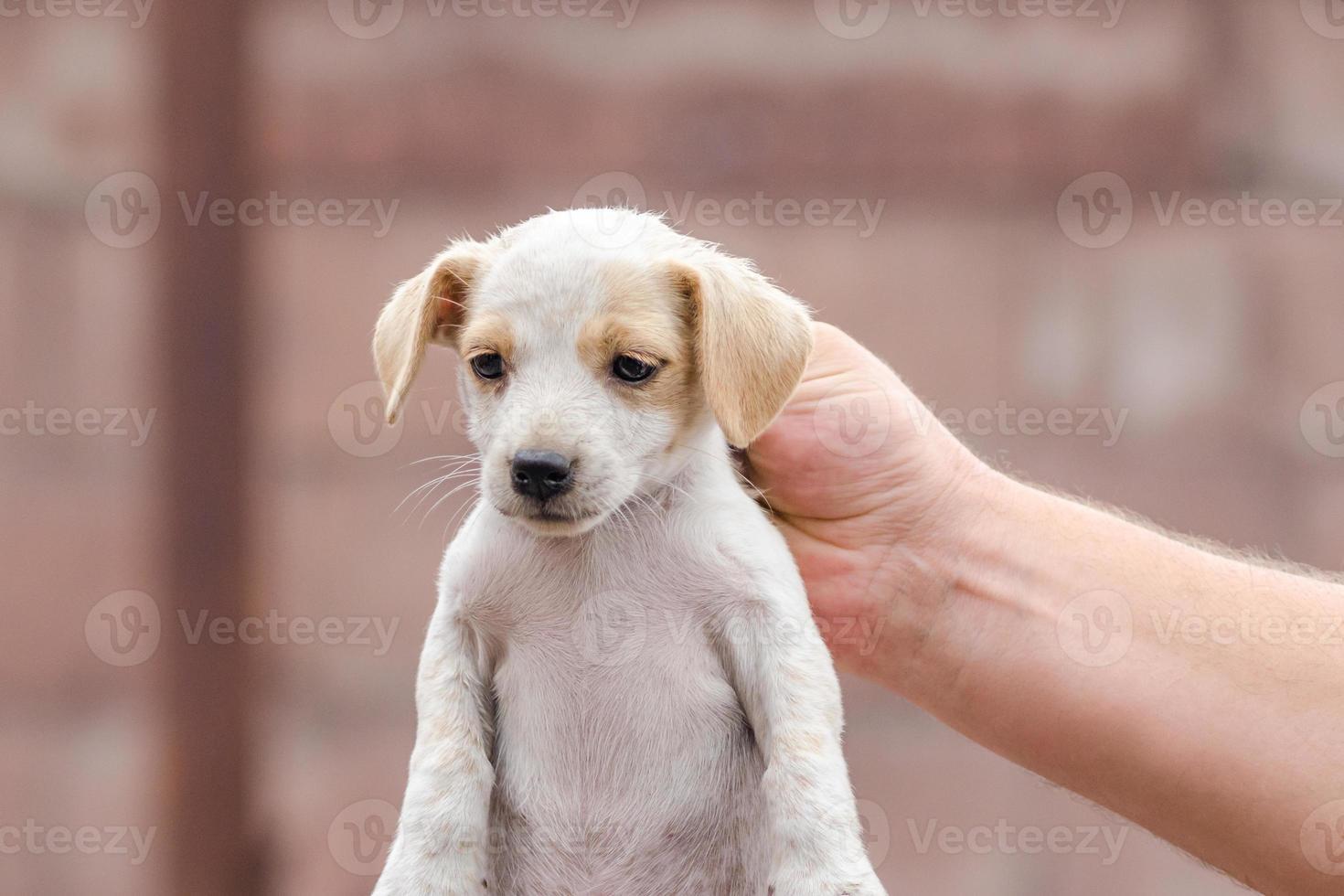 persoon die een puppy bij de nek vasthoudt foto