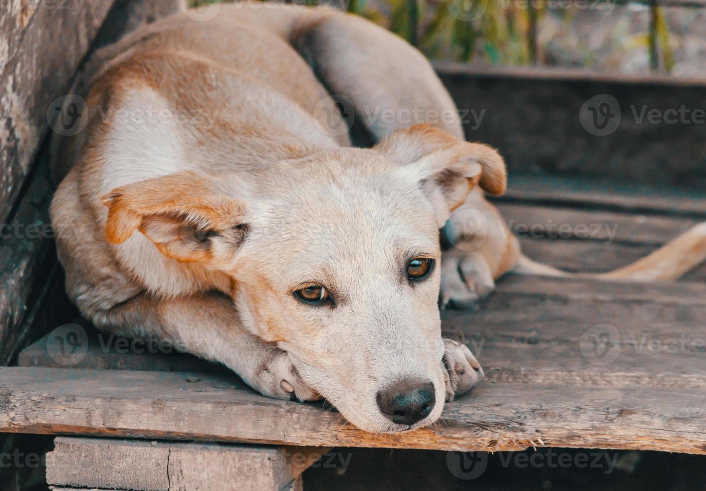 droevige hond op hout foto