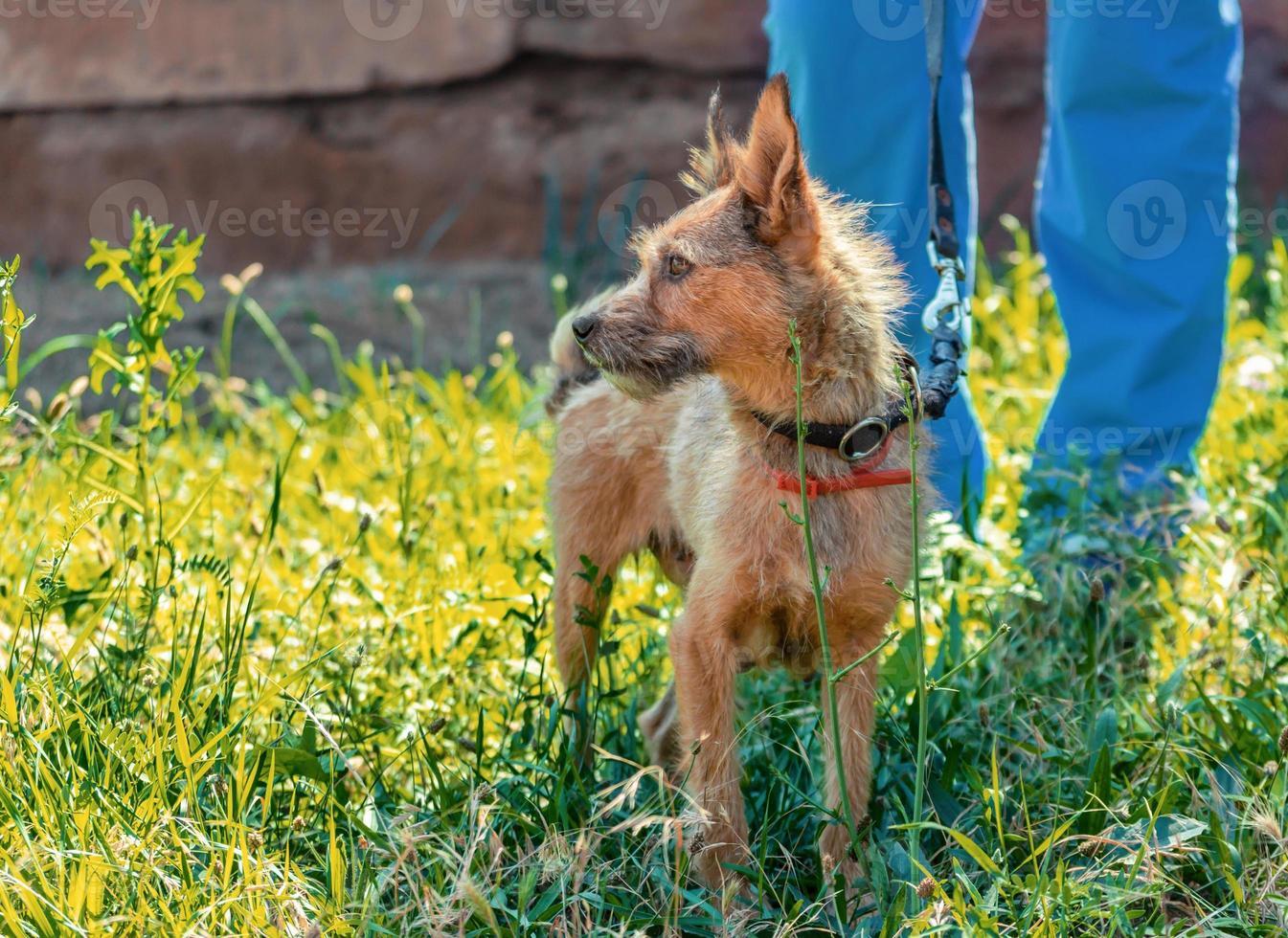 hond en baasje in gras foto