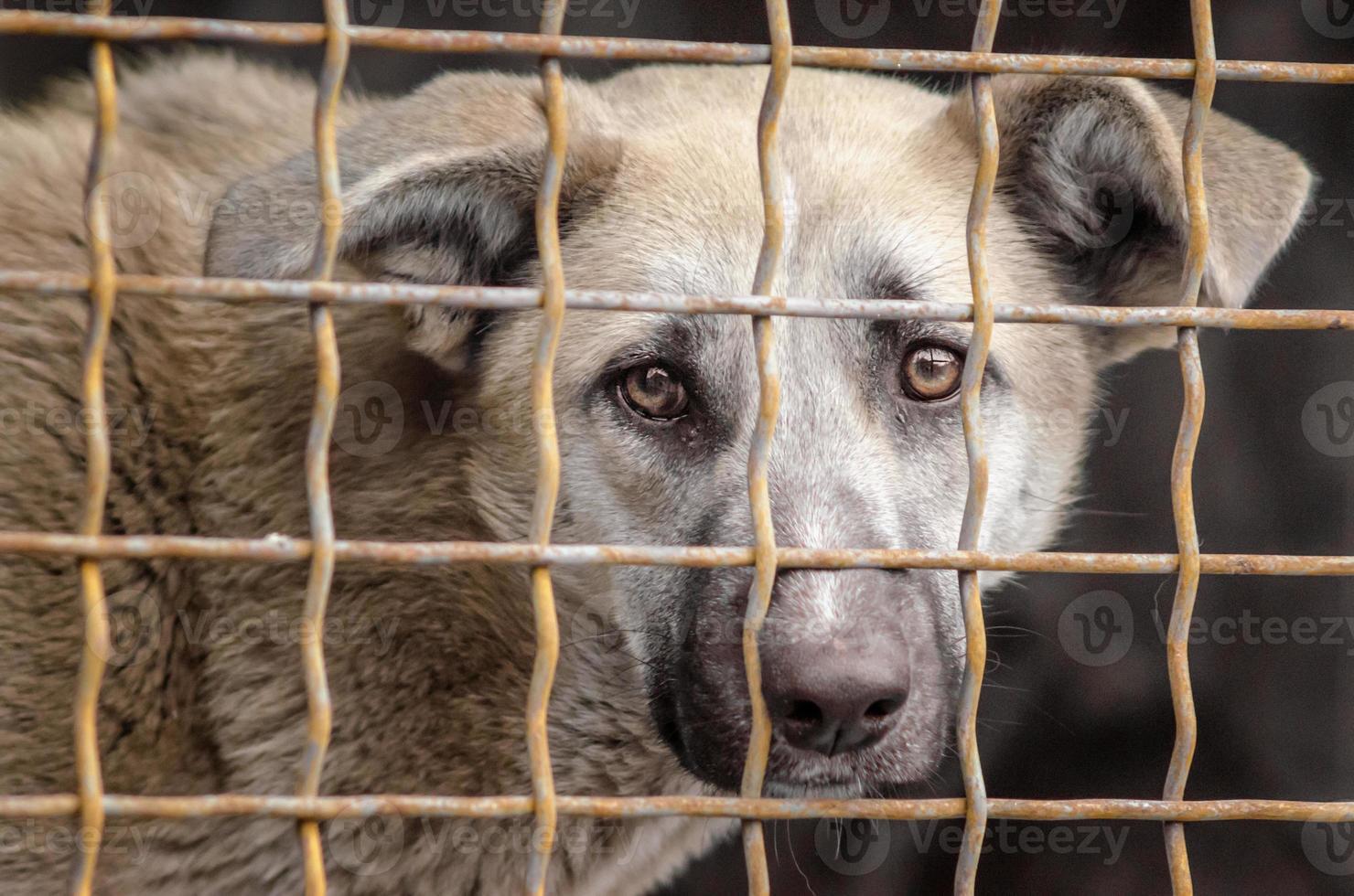 hond in een metalen kooi foto