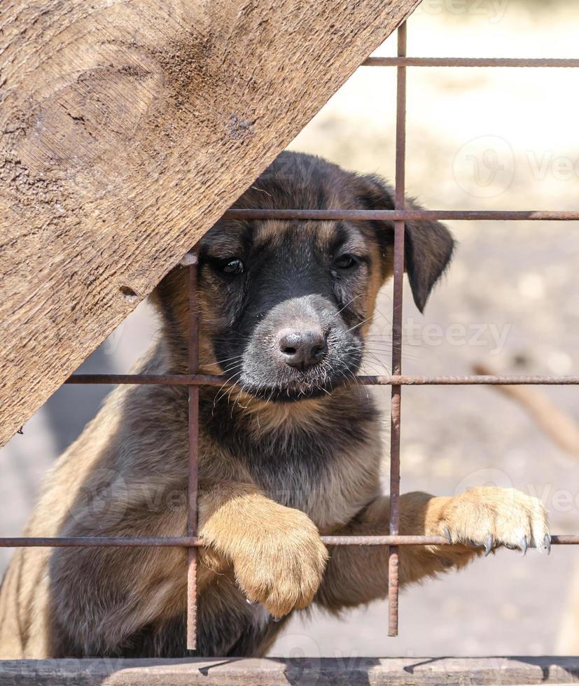 bruine en zwarte pup achter een hek foto