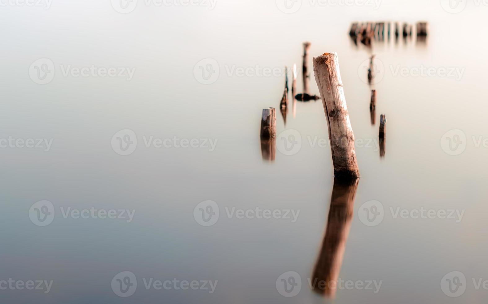 hout in kalm water foto