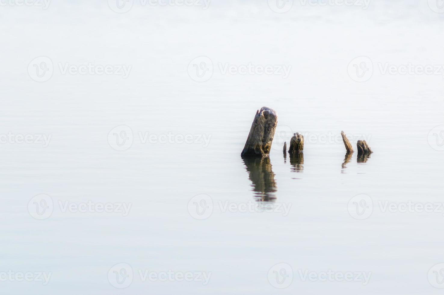 houten palen in water foto