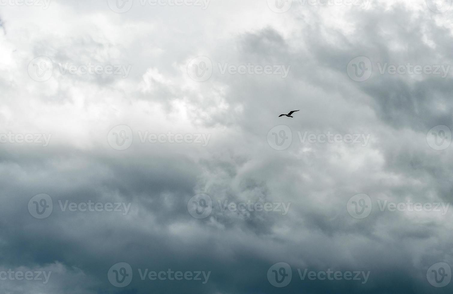 eenzame vogel tegen een stormachtige lucht foto