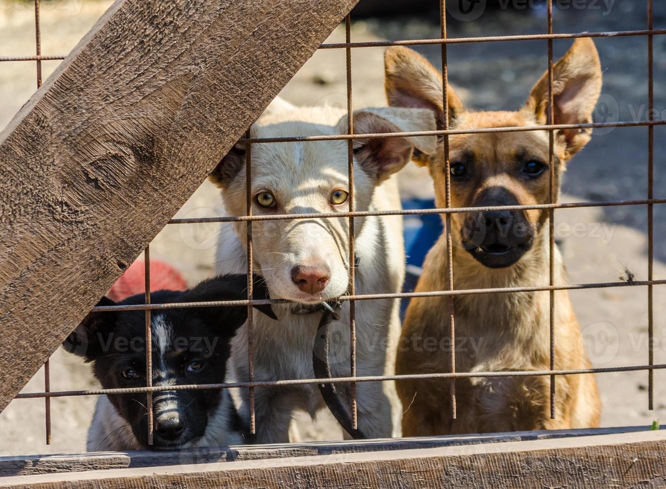 drie puppy's achter een hek foto