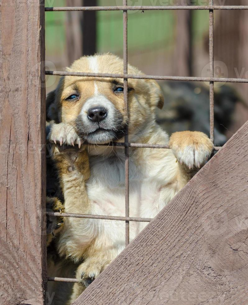 puppy steken poten uit hek foto