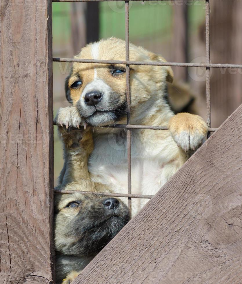 puppy gluren uit hek foto