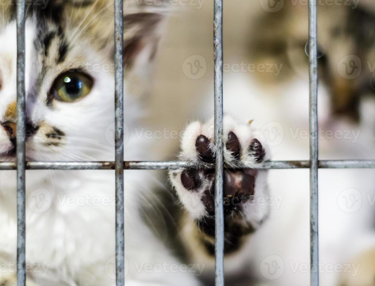 kittens in een kooi foto