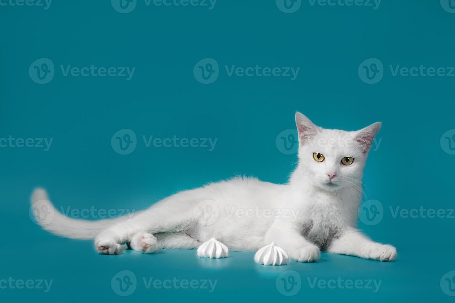 witte kat tot op een blauwe achtergrond foto