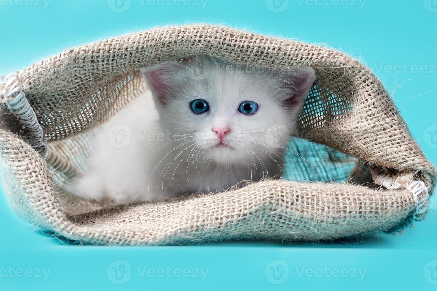 witte kitten in een zak foto