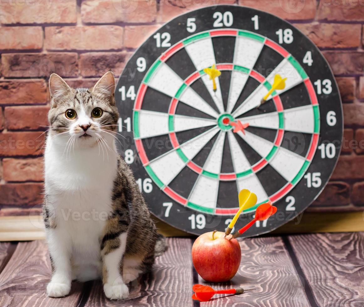 kat met dartbord en appel foto