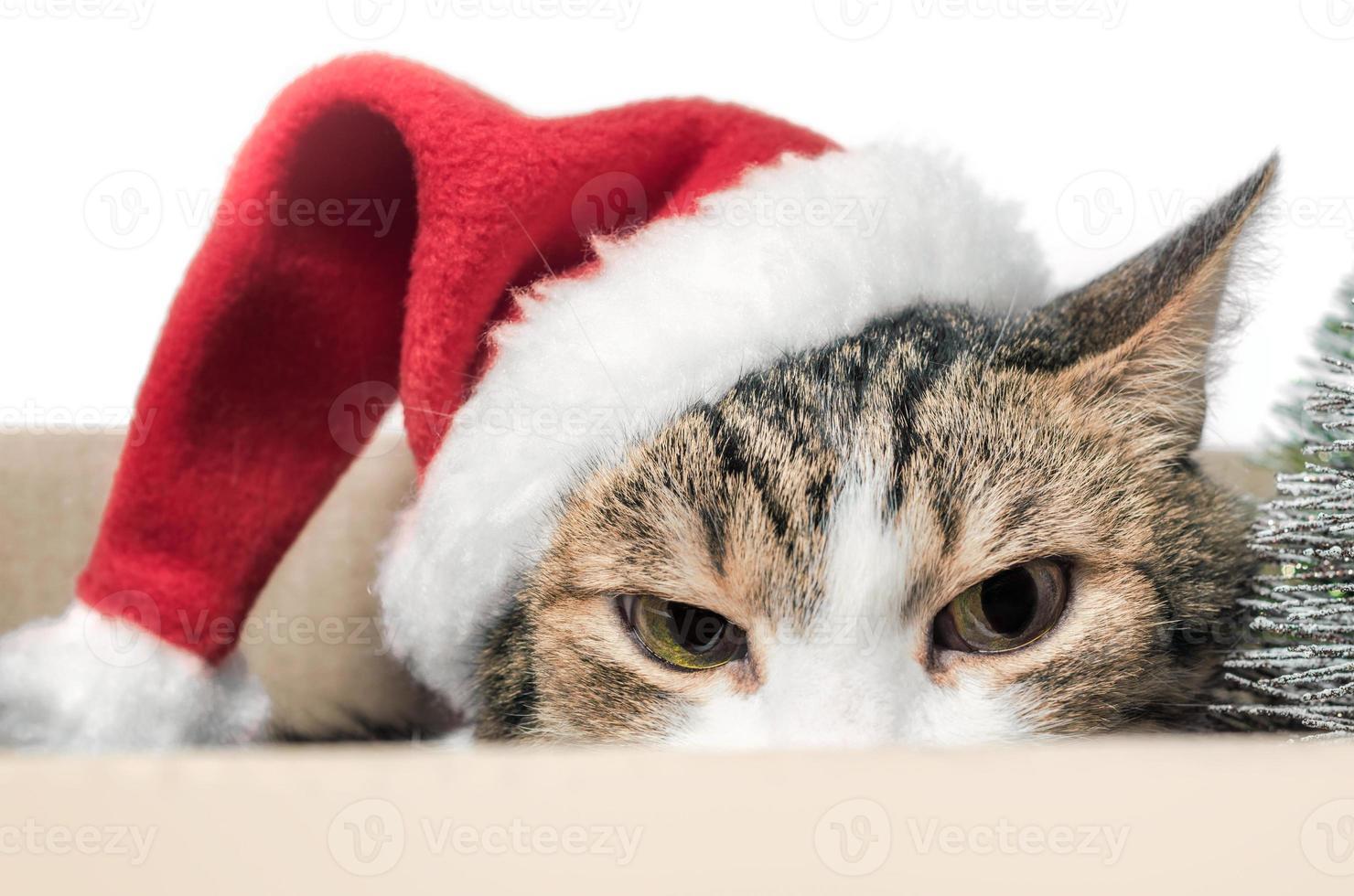 boze kat in een kerstmuts foto