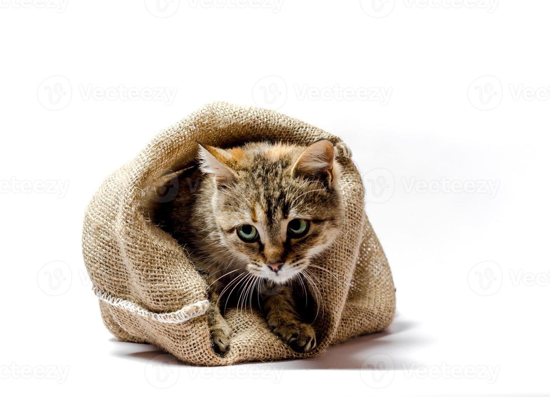 kat kruipt uit een zak foto