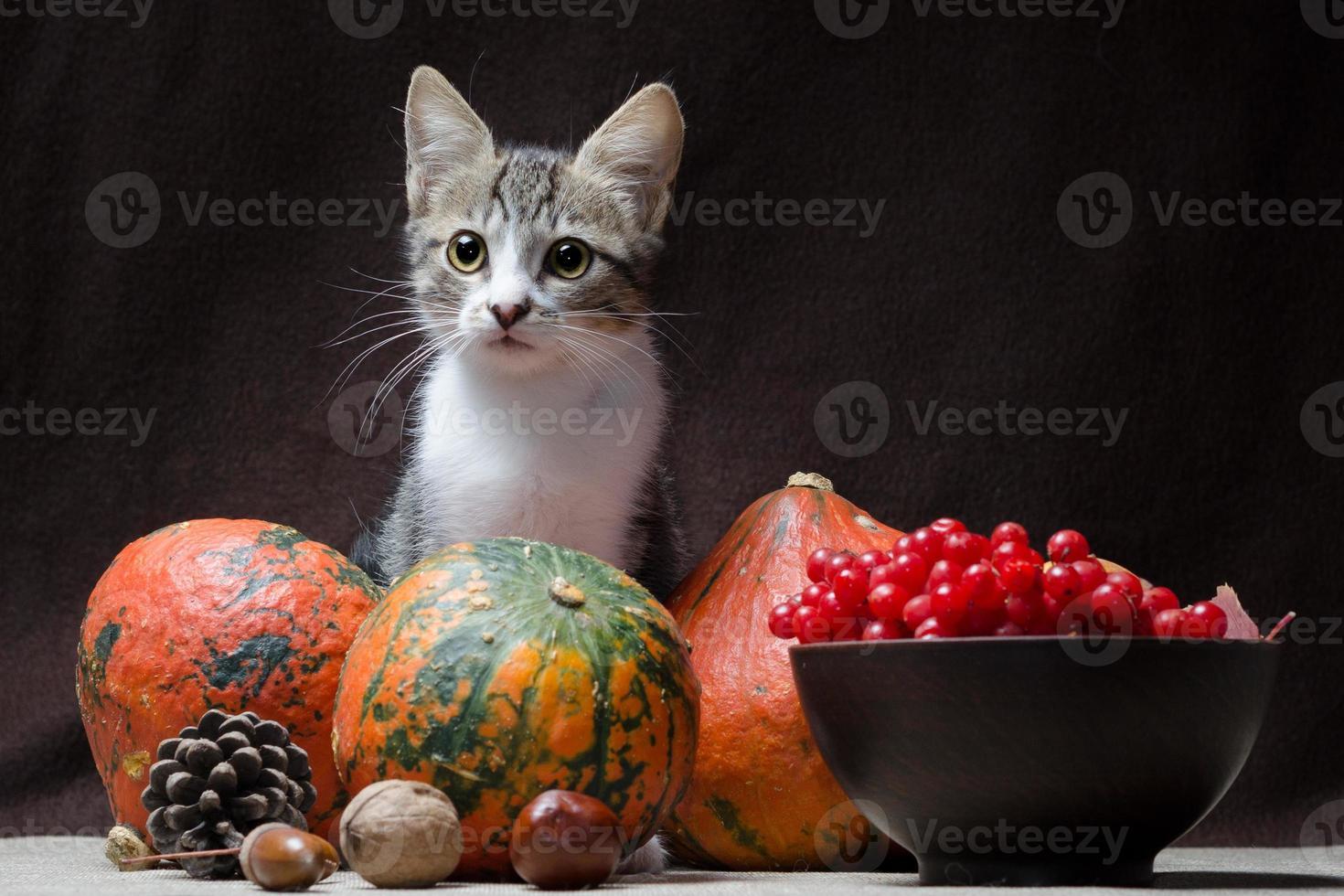 kat met herfstfruit foto
