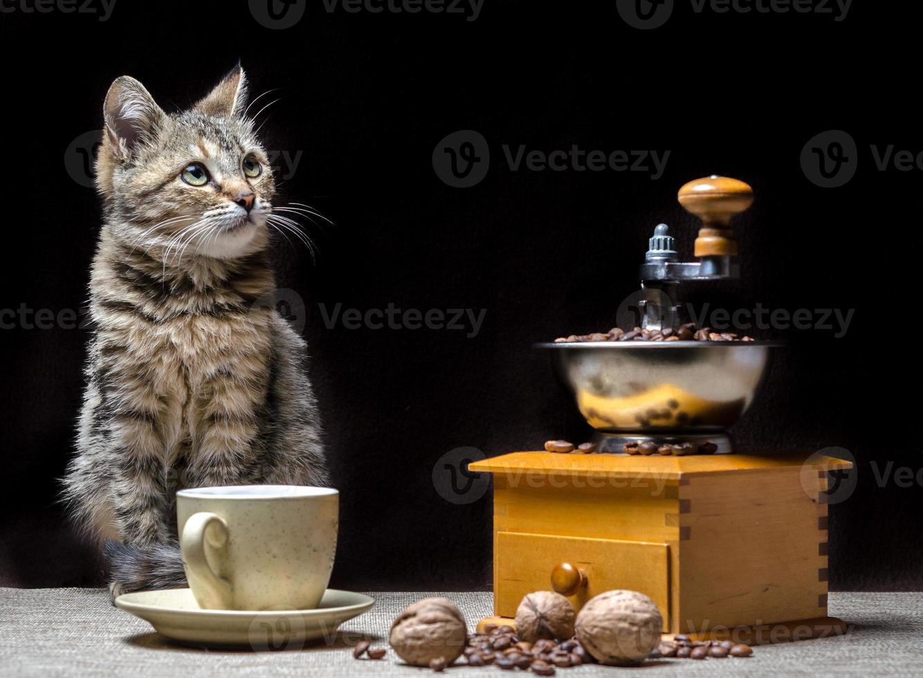 kat met gebrande koffie foto