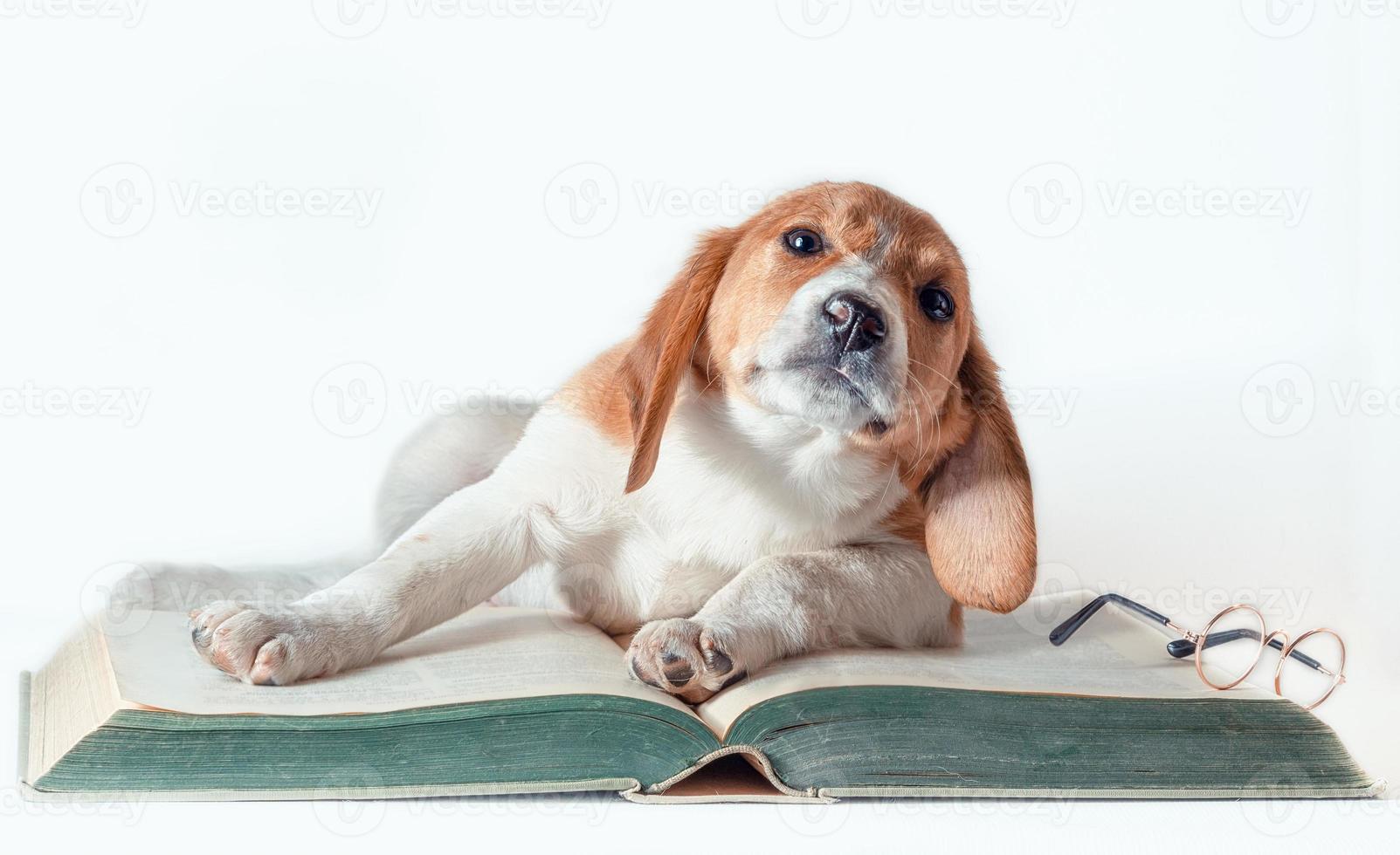 hond op een boek met een bril foto