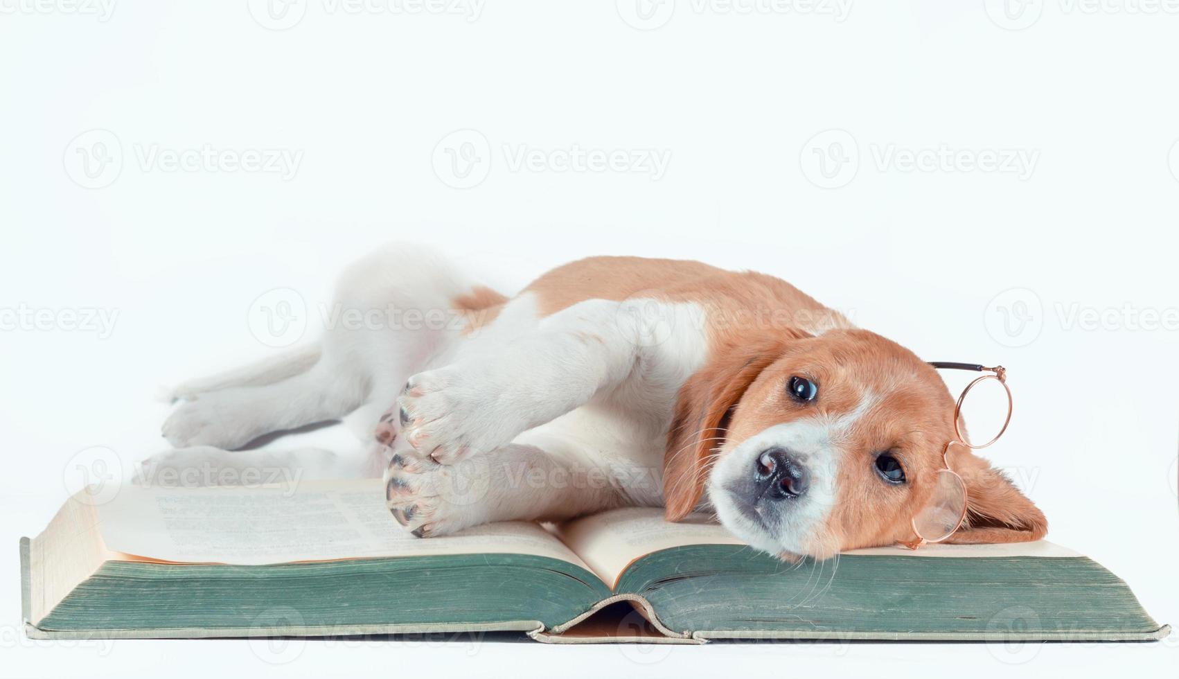 hond een boek opleggen met een bril foto