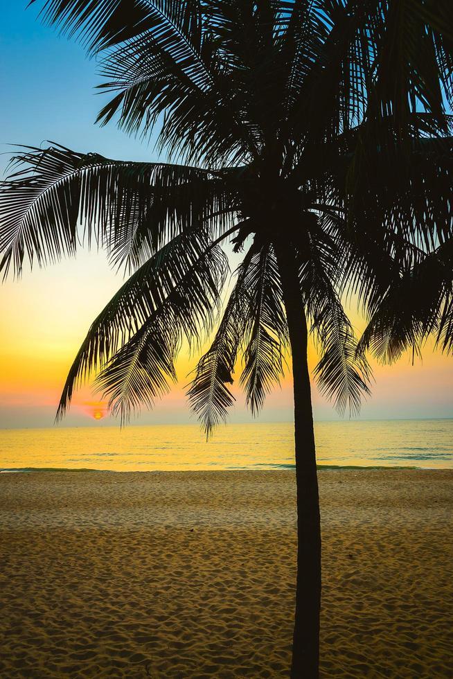 silhouet van een palmboom foto