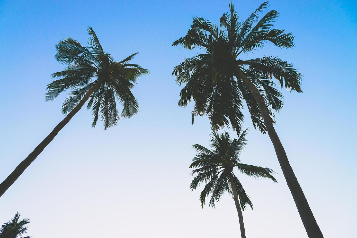silhouet van palmbomen foto
