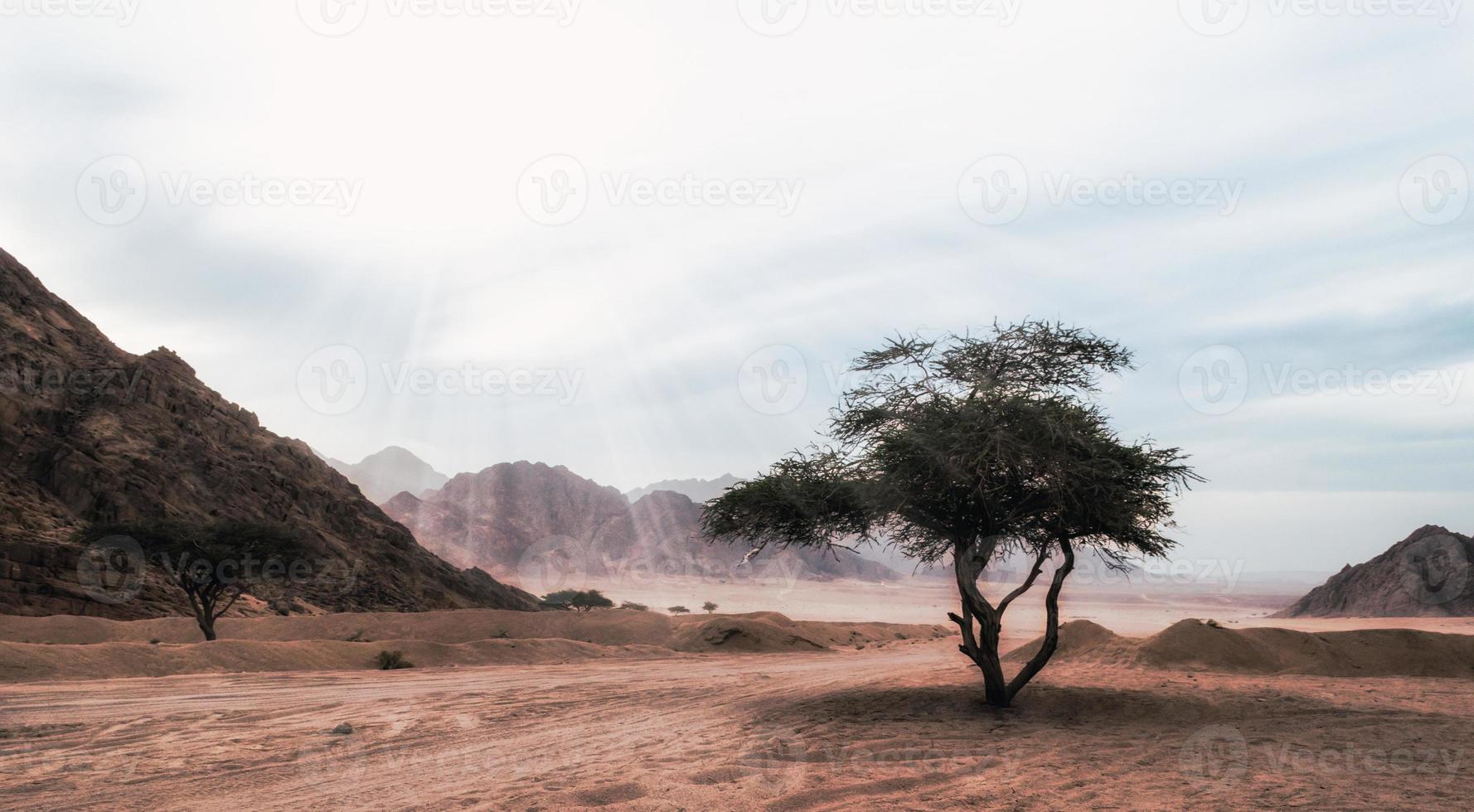 boom in een rotsachtig berglandschap foto