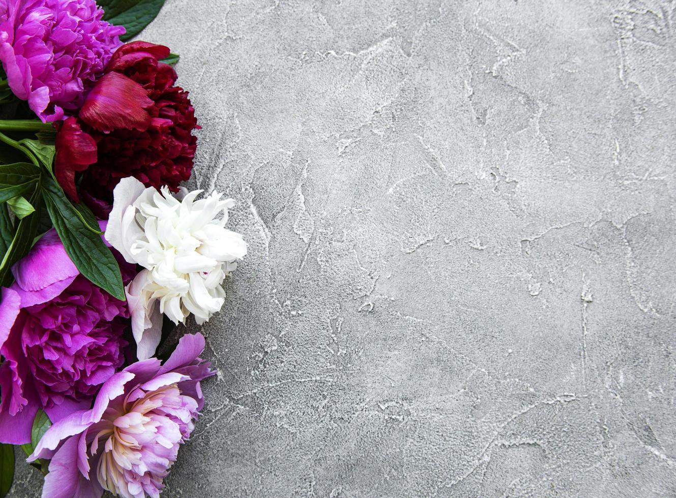 peony bloemen op een grijze betonnen achtergrond foto
