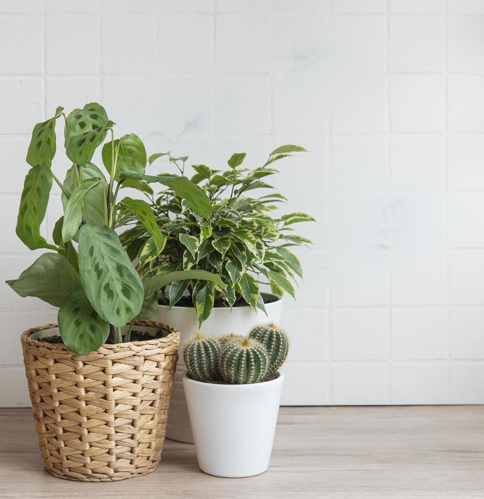 kamerplanten op tafel foto