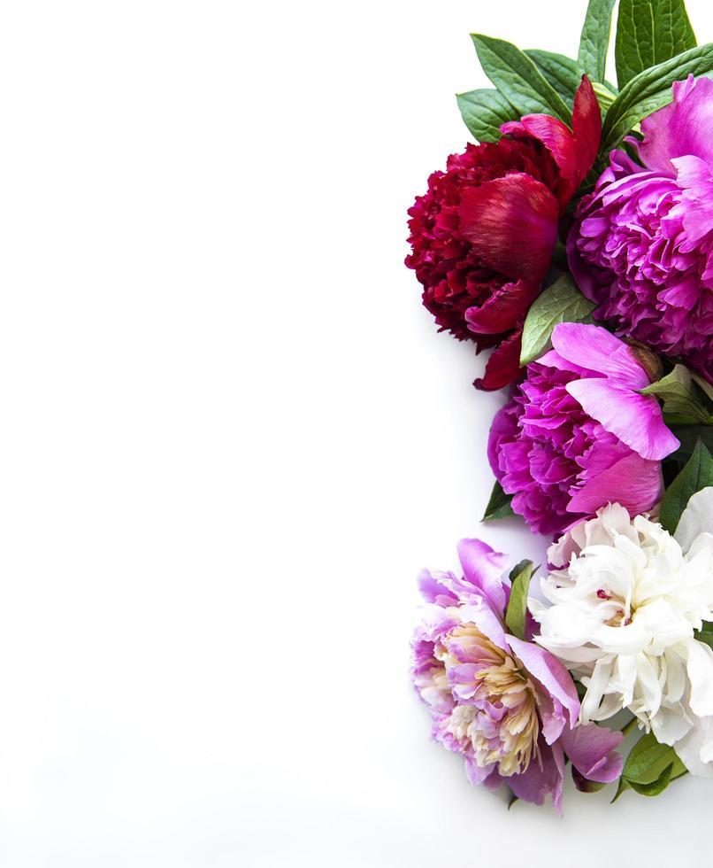 peony bloemen op een witte achtergrond foto