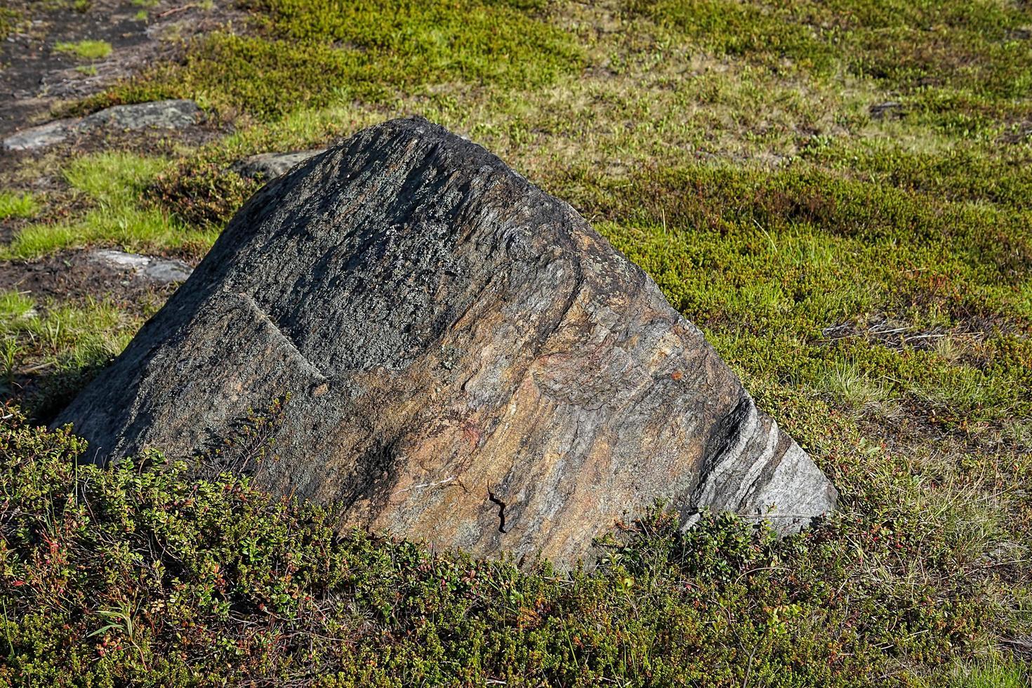 grote rots in een groen veld in Rusland foto