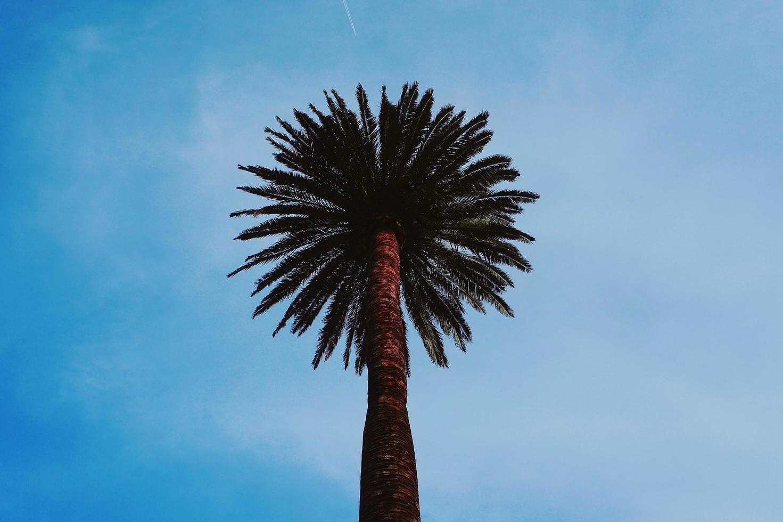 palmboom en blauwe hemel in de lente foto