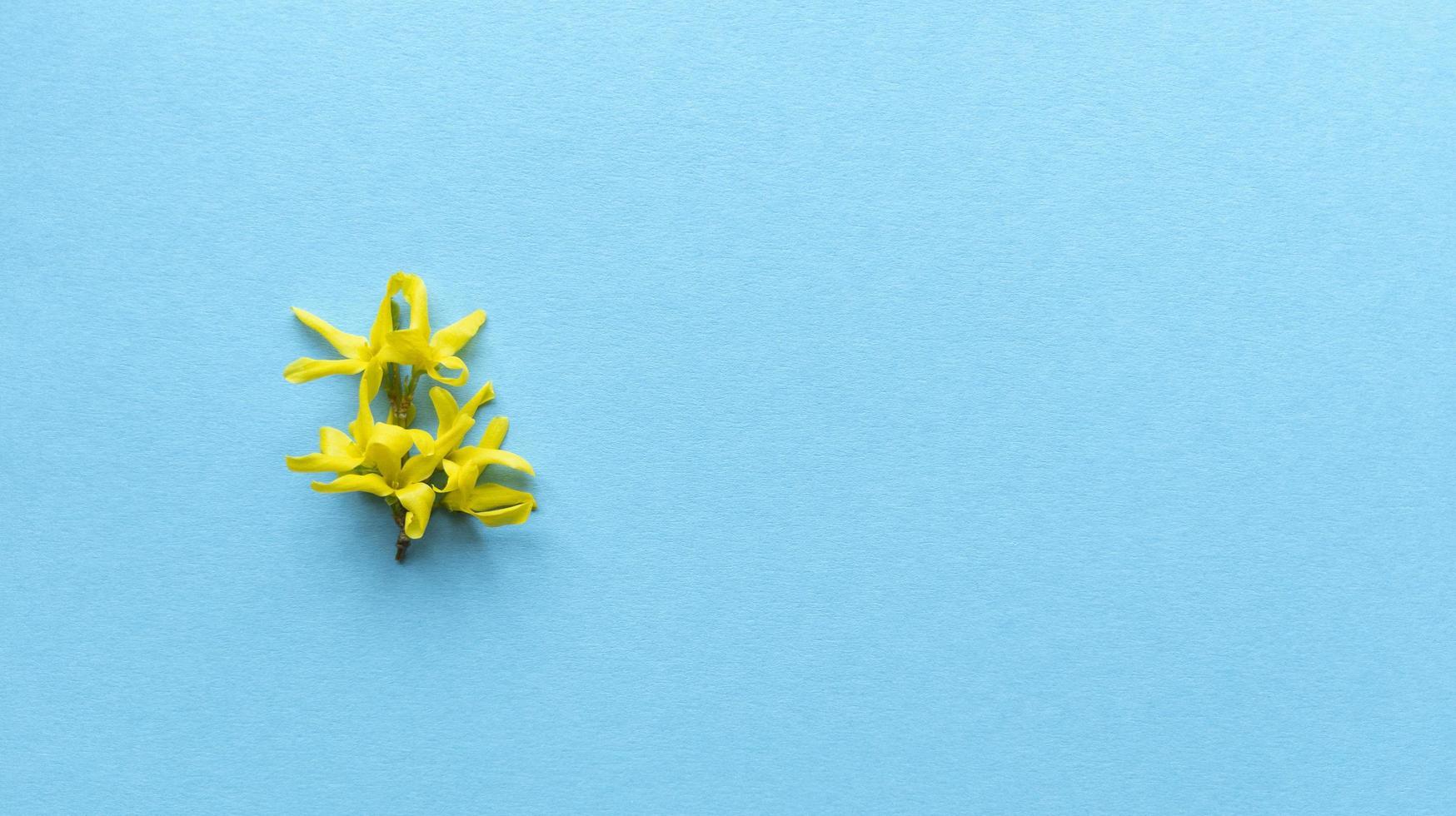 gele bloem blauwe achtergrond. eenvoudig plat leggen met pastel textuur. mode eco-concept. Stock foto. foto