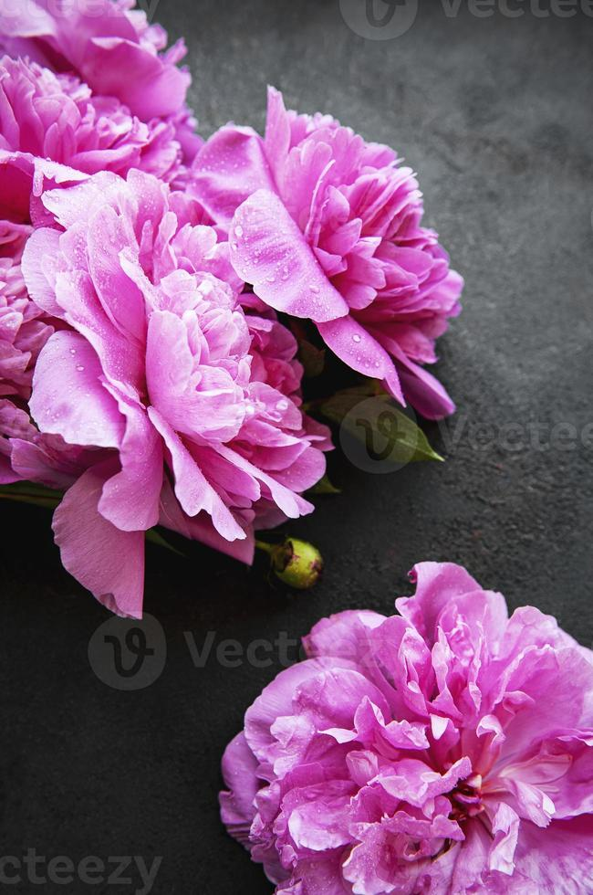 peony bloemen grens op een zwarte achtergrond foto