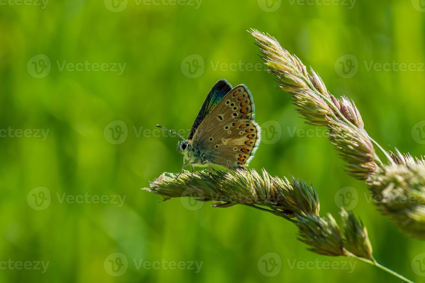 close up van een vlinder foto