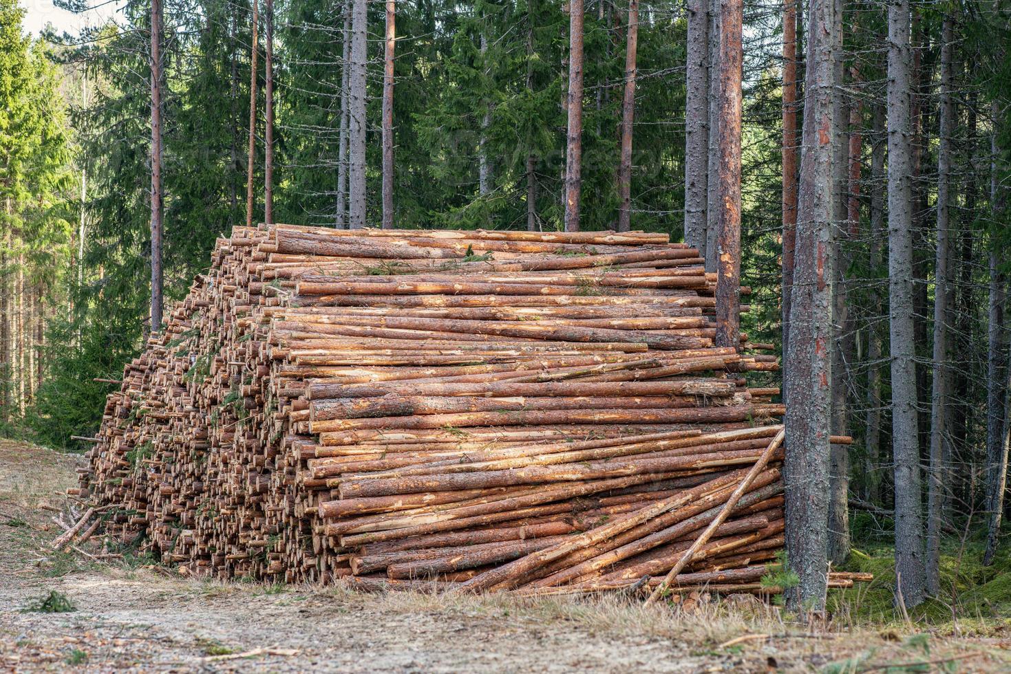 grote stapel dennenhout in een bos foto