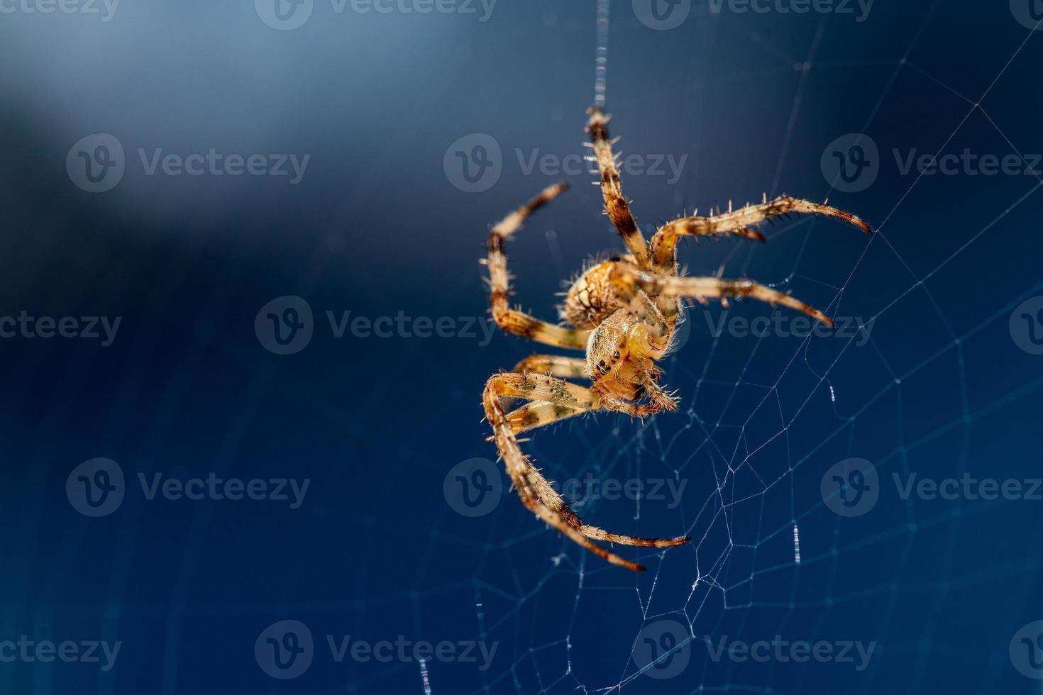 close-up van een spin op zijn web foto