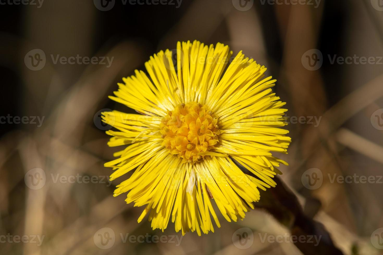 close-up van een gele bloem foto