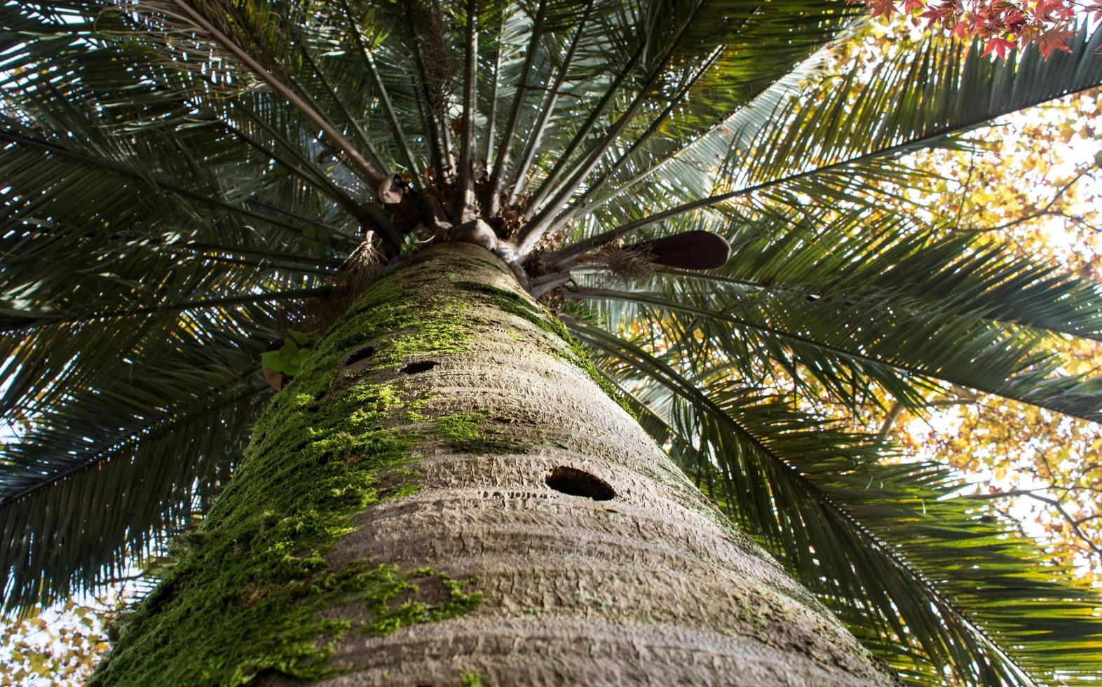 natuurlijke achtergrond met palmstam en bladeren foto