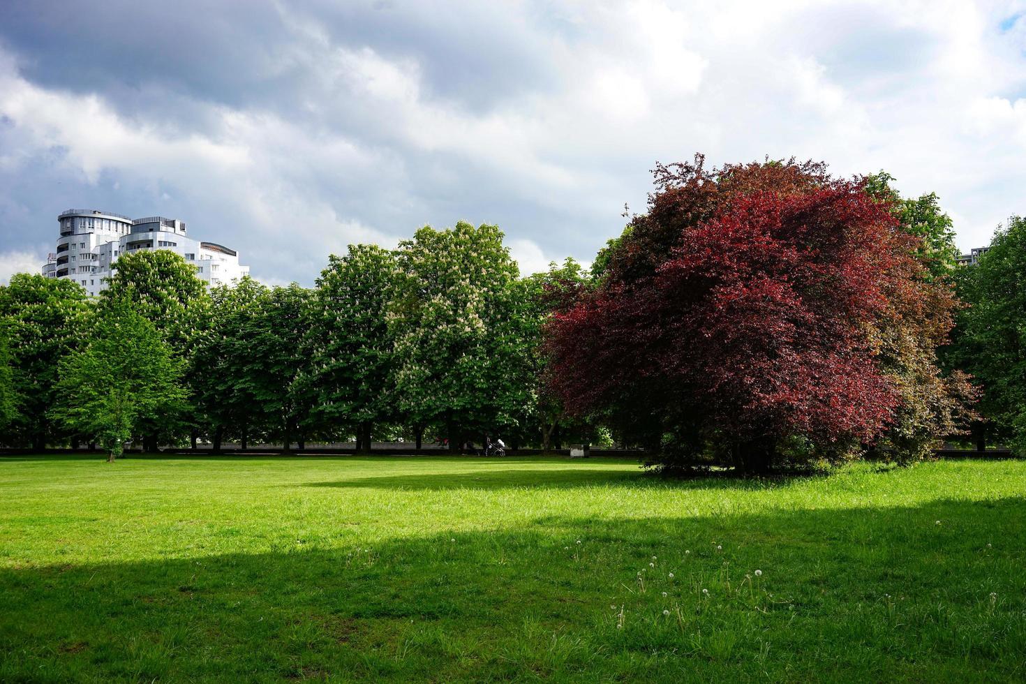 park gazon met groen gras foto