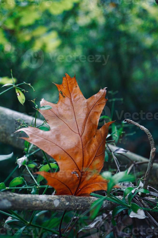 bruin blad in de herfst foto